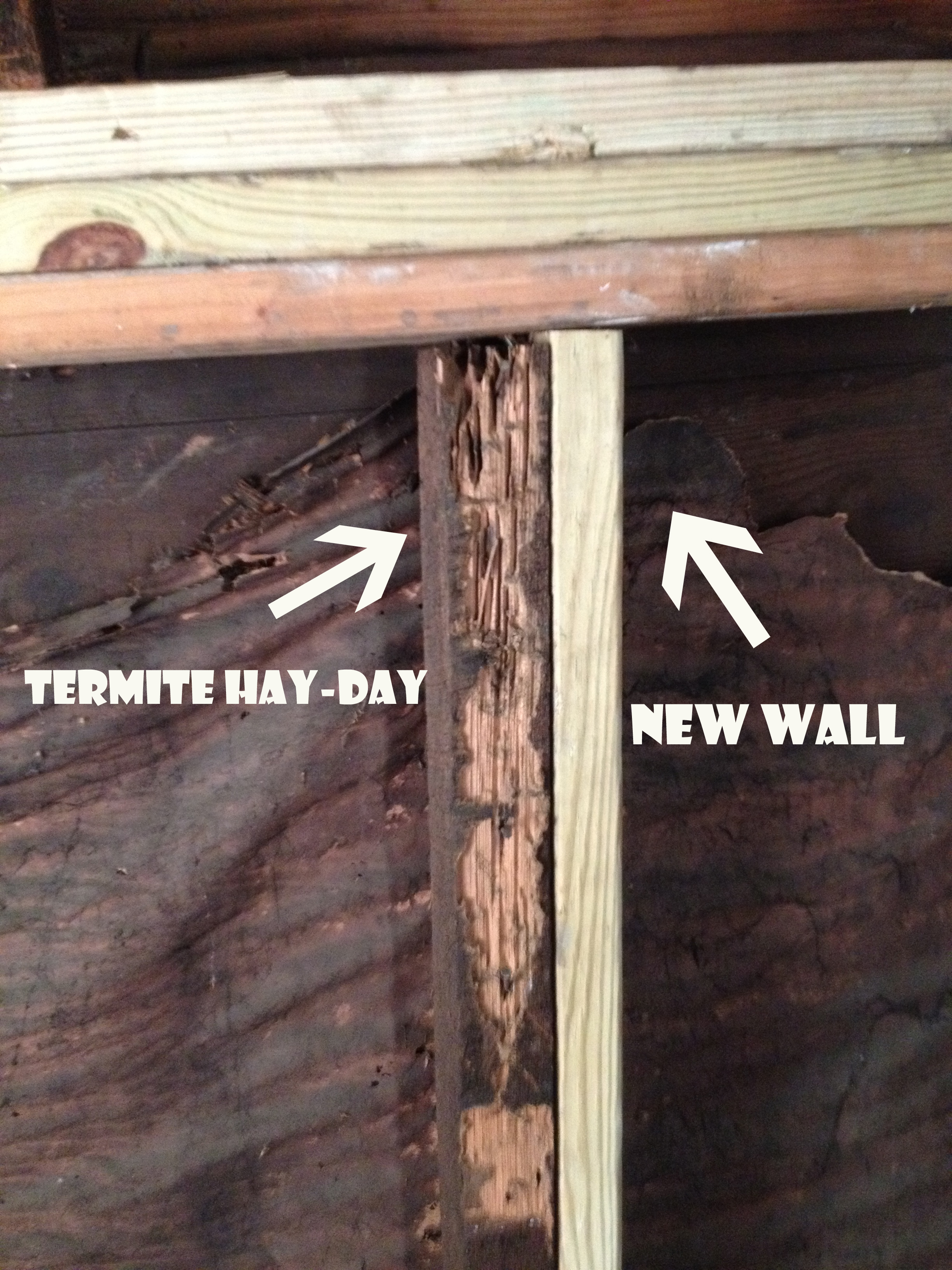 Termites Younganddomestic