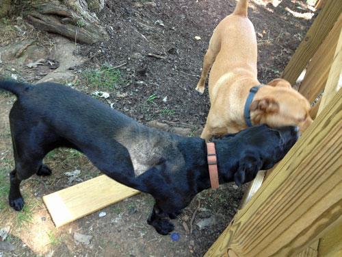 Porch_puppies