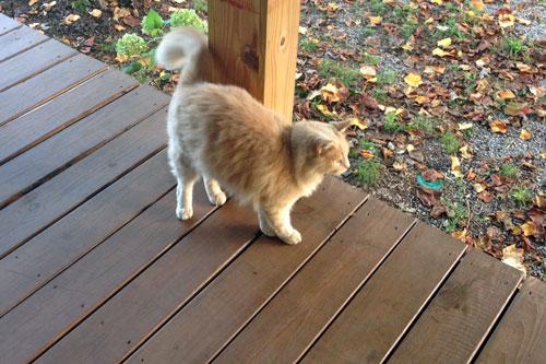 Porch_cat